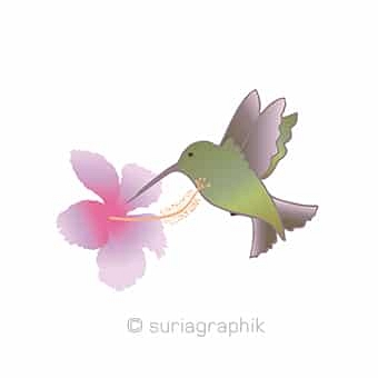 index-kolibri_1492613027.jpg